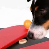Dog Activity - Push Away, fotografie 7/4