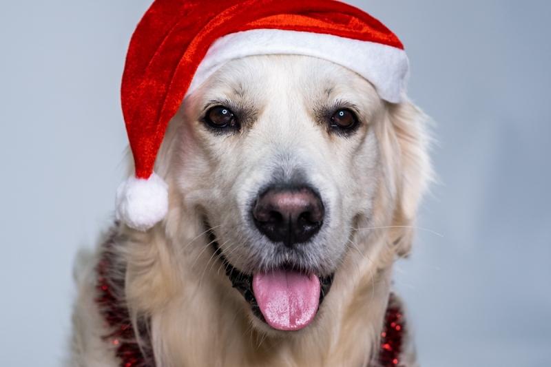 Vánoční otevírací doba našich prodejen