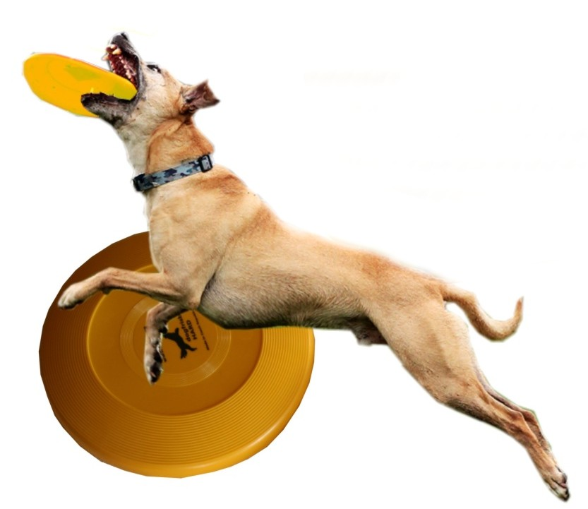 DogFrisbee Dr.Dog Hard