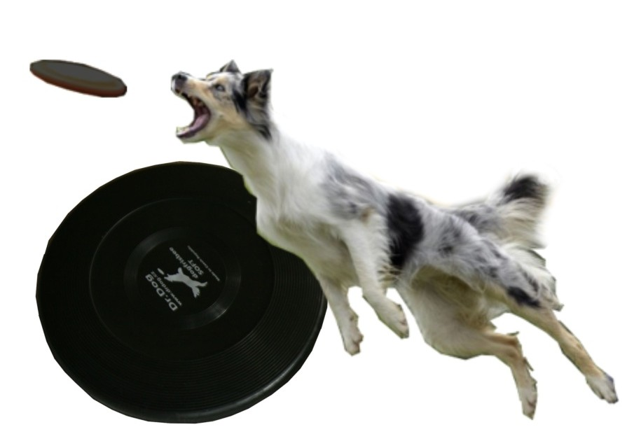 DogFrisbee Dr.Dog Soft