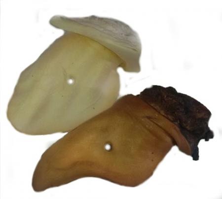 Ucho hovězí sušené