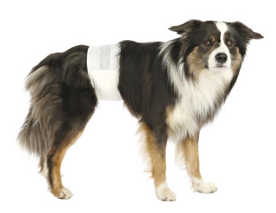 Pleny pro psy